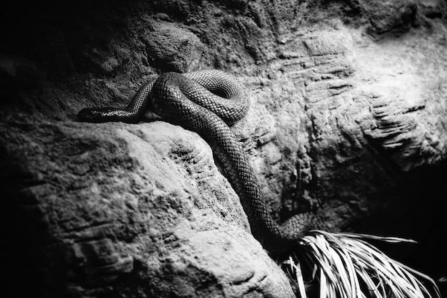 Een gevaarlijke slang in zijn grot