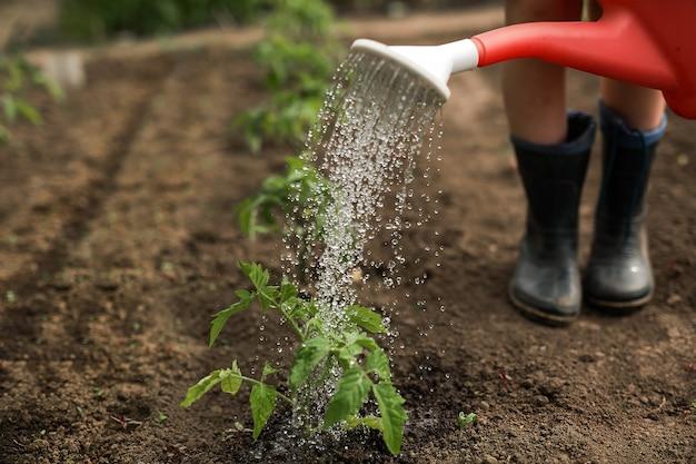 Een gieter drenkt de tuinbedden en rubberen laarzen