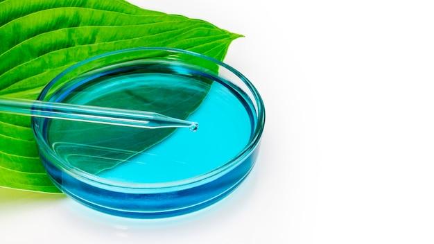 Een glazen petrischaal staat op een groen blad van een plant met een meetbuis op een witte achtergrond. biotechnologie onderzoeksconcept. natuurlijke natuurlijke oliën. detailopname. ruimte kopiëren.