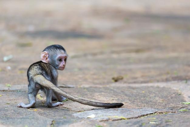 Een grappig aapje speelt op de grond of in de boom