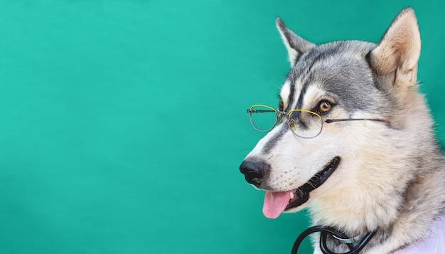 Een grappige husky in glazen arts op een groene achtergrond met kopie ruimte