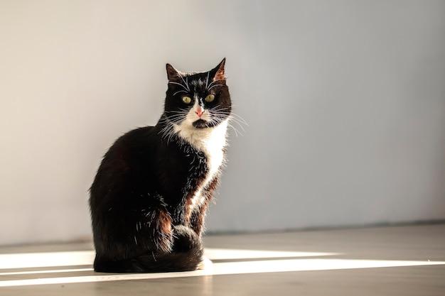 Een grappige kat zit in een lichtstraal en kijkt direct in de camera.