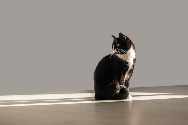Een grappige kat zit in een lichtstraal en kijkt terug.