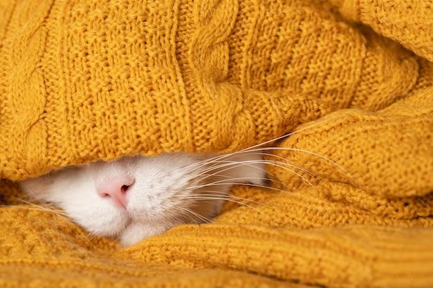 Een grappige slaperige kat bereidt zich voor op een koude herfst