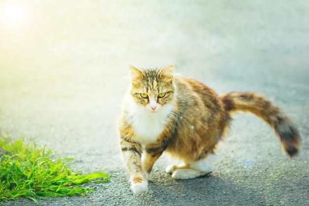 Een grijs bruin witte pluizige schattige huiskat in de buitenlucht of het park