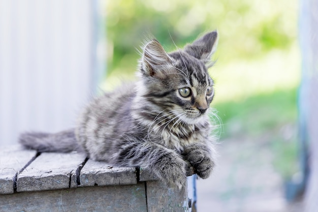 Een grijs gestreepte kitten zit op een oude stoel op straat