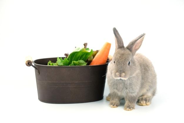 Een grijs konijn zat naast een ijzeren emmer met wortels en groene groenten.