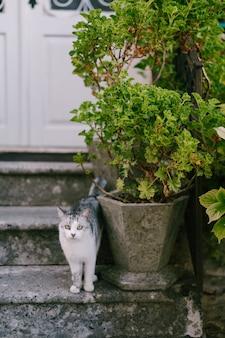 Een grijs-witte kat staat op de veranda naast een plantpot.