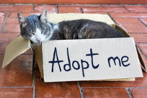 Een grijs-witte volwassen kat slaapt in een kartonnen doos met tekst adopt me