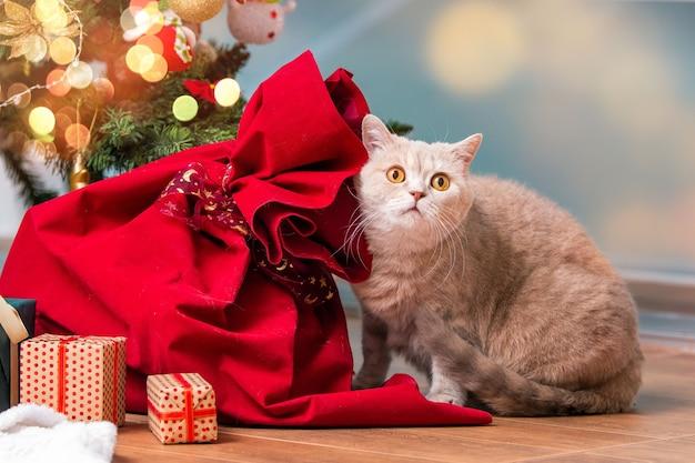 Een grijze britse kat met gele ogen bekijkt de geschenkdozen onder de kerstboom in de woonkamer.