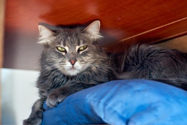Een grijze kat liggend op een blauw kussen onder een tafel