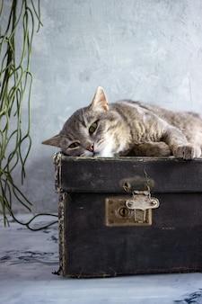 Een grijze kat ligt op een zwarte koffer