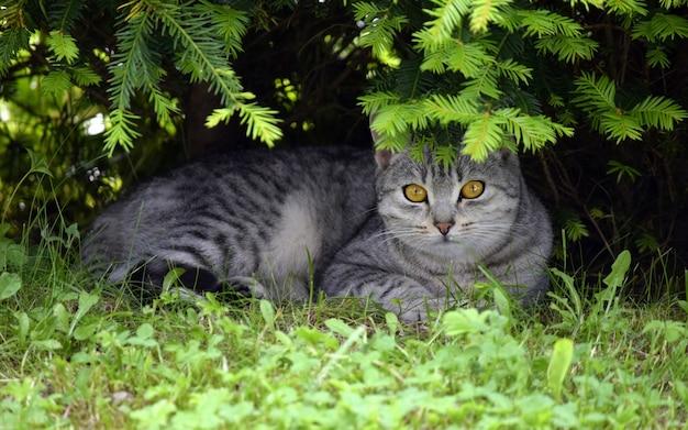 Een grijze kat ligt op het gras onder een boom