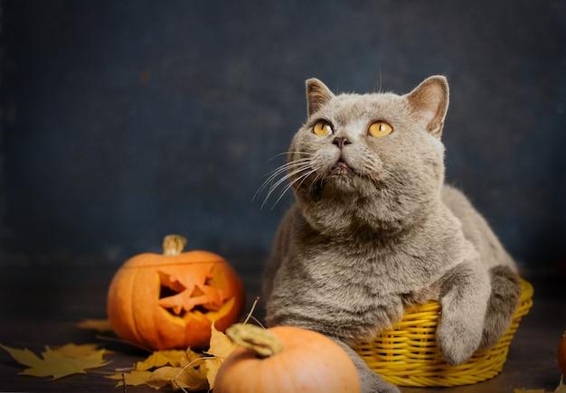 Een grijze kat met gele ogen zit in een klein geel mandje omringd door herfstbladeren en pompoenen.