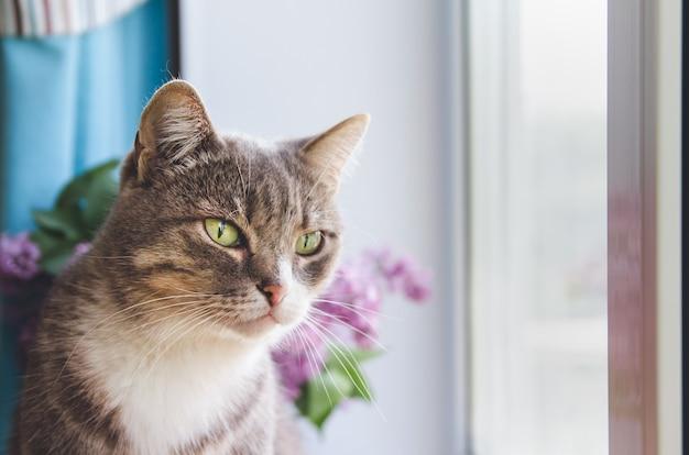 Een grijze kat zit bij het raam. de kat kijkt uit het raam.