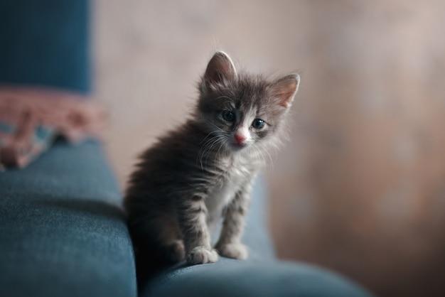 Een grijze kitten zittend op een blauwe bank