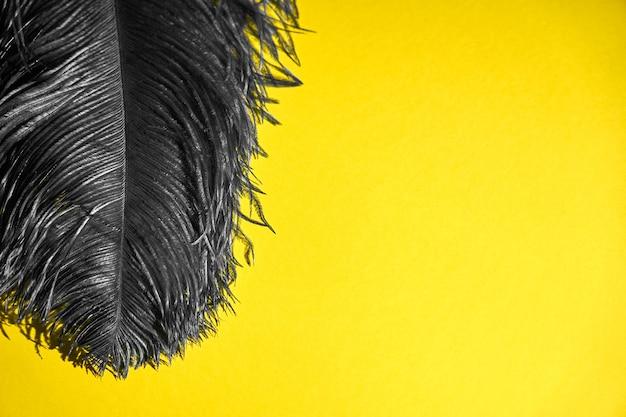 Een grijze pauwenveer op een gele achtergrond.
