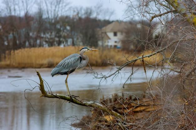Een grijze reiger zit op de tak van een boom.