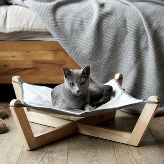 Een grijze russisch blauwe kat ligt in een speciaal hangmatbed voor katten