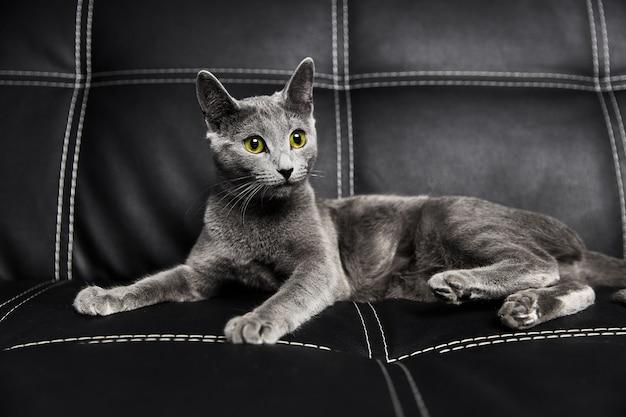 Een grijze russisch blauwe kat ligt op een leren zwarte bank
