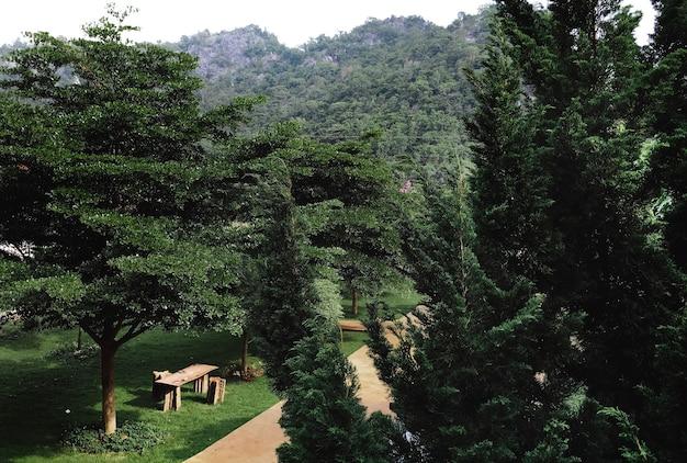 Een groen park