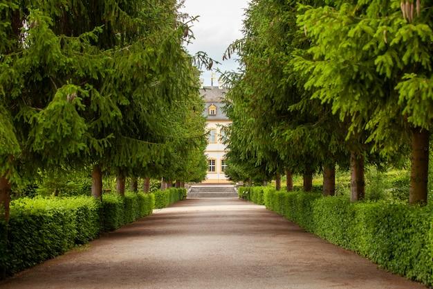 Een groen steegje dat zich uitstrekt in de verte in een grote tuin