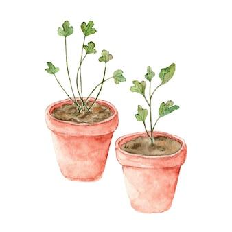 Een groene kamerplant groeit uit de grond in een aarden pot aquarel geschilderd op wit