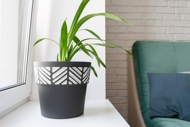 Een groene plant in een zwart-witte bloempot staat