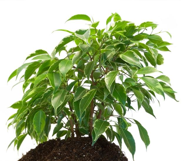 Een groene plant op het wit