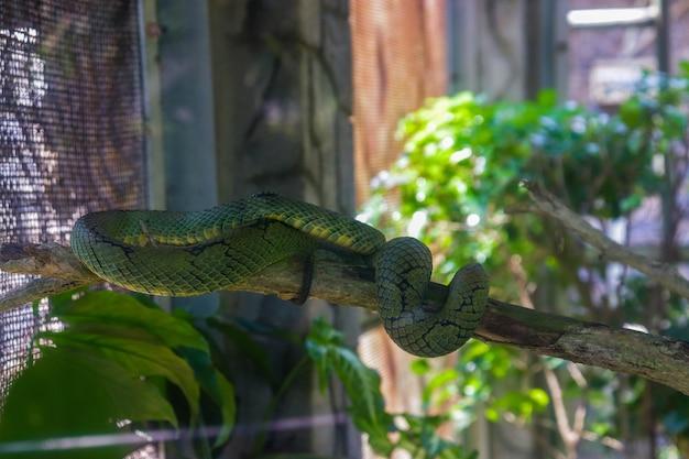 Een groene slang in een kooi in de dierentuin