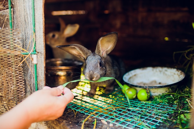 Een groep jonge konijnen in het hok