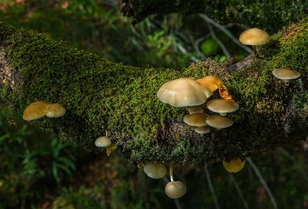 Een groep paddenstoelen zit vast in een stam
