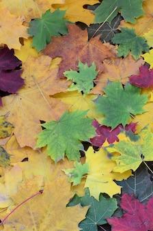 Een groot aantal gevallen en vergeelde herfstbladeren op de grond