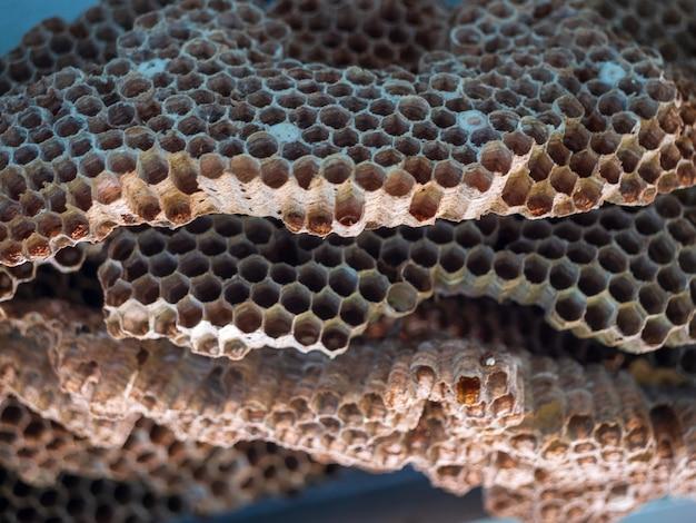 Een groot wespennest wespennest met wespen erop het nest van een wespenfamilie dat wordt genomen