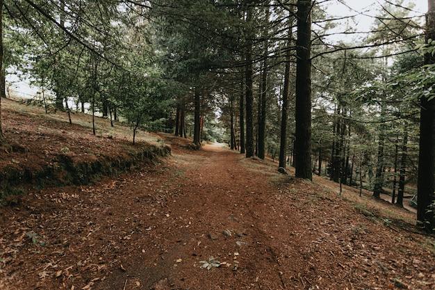 Een groothoekopname van een bos in de herfst met veel gevallen bladeren en hoge bomen