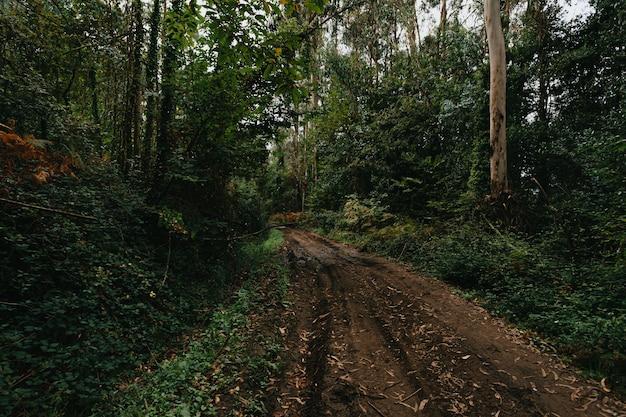 Een groothoekopname van een modderige weg midden in het groene regenwoud tijdens de herfst