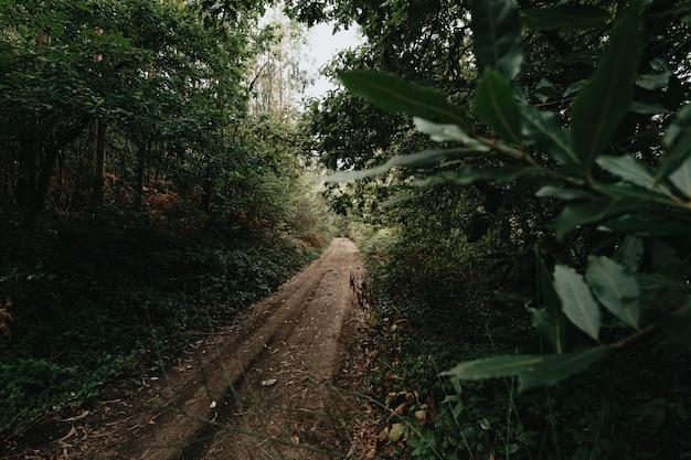 Een groothoekopname van een pad midden in het bos tijdens een regenachtige herfstdag
