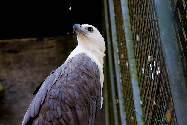 Een grote adelaar in een kooiclose-upbeeld van dierentuin