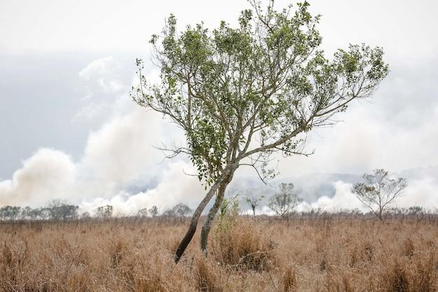 Een grote brand vernietigt de vegetatie in het gebied van een boerderij