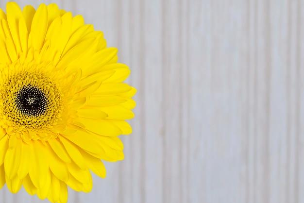 Een grote gele bloem op lichte dichte omhooggaand als achtergrond