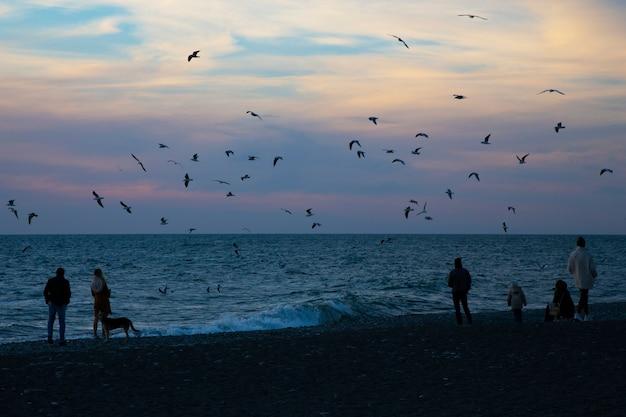 Een grote groep mensen lopen op het strand en praten. reizigers kwamen naar het strand om de zon te zien. mensen, zee, zonsondergang, meeuwen, hond, einde van de dag