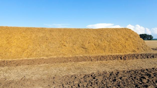 Een grote hoeveelheid stro geladen in een grote stapel voor opslag voor de winter, zomer