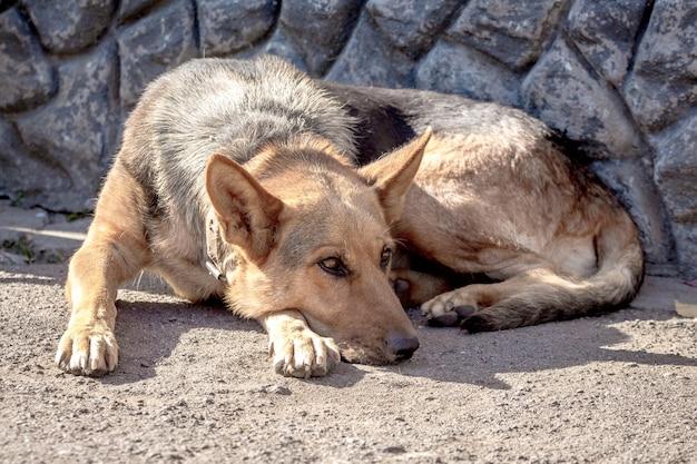Een grote hond ligt op het asfalt bij het huis en mist de eigenaar_