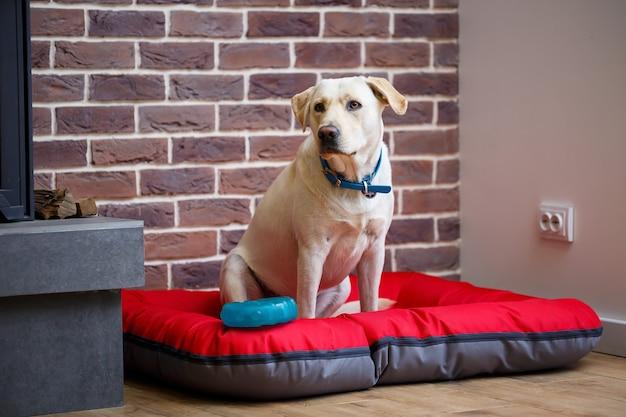 Een grote hond van een lichtgekleurd wollen labrador-ras zit op een rood nest tegen een bakstenen muur