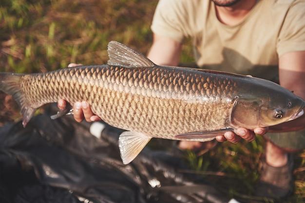 Een grote karper die net gevangen is door ervaren vissers. de trofee vis schittert met zijn schubben