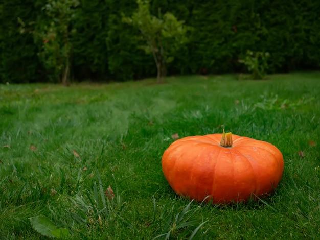 Een grote pompoen op groen gras in de herfst