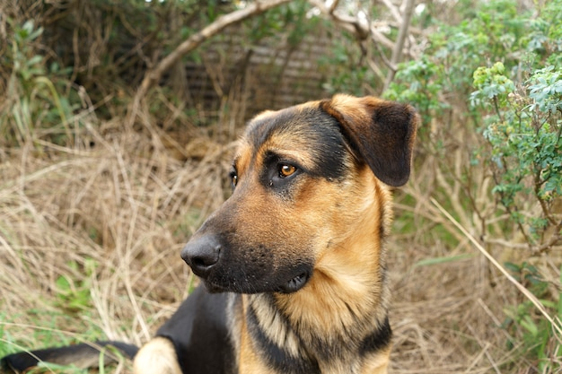 Een grote rassenhond met een lieve en droevige blik. ruimte kopiëren.