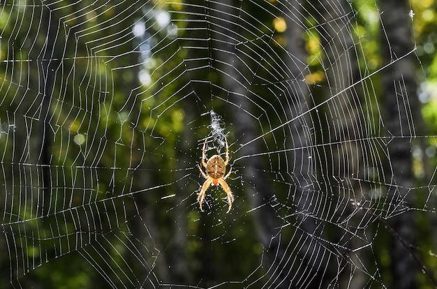 Een grote spin met een patroon op een web in het bos. halloween, een virus op internet.