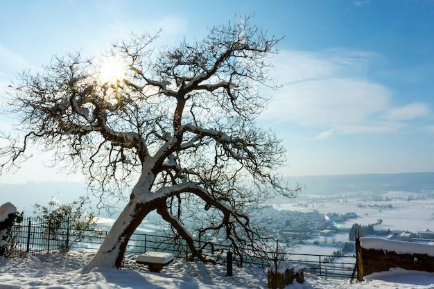 Een grote vertakte, met sneeuw bedekte boom, het dorp op een zonnige winterdag