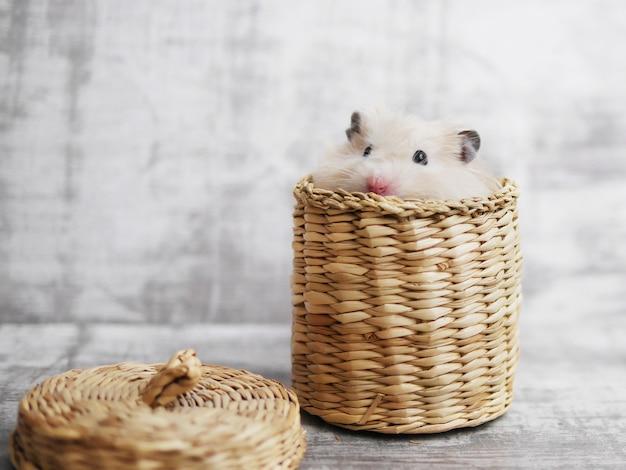 Een hamster in de mand.